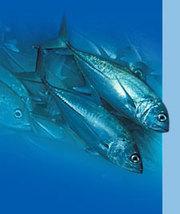 рыбопродукция