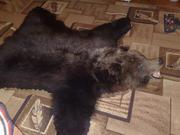 Продам ковер из шкуры медведя